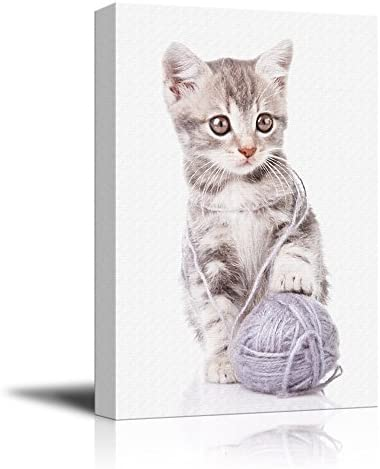 Cute Cat Playing with a Wool Ball