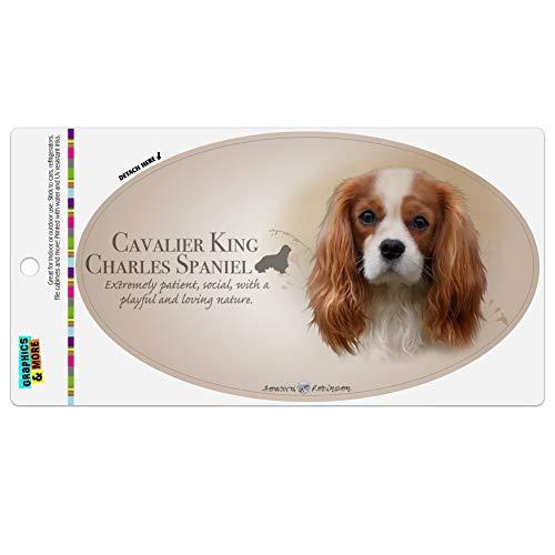 Graphics and More Cavalier King Charles Spaniel Dog Breed Automotive Car Refrigerator Locker Vinyl Euro Oval Magnet - Charles Cavalier King Magnet