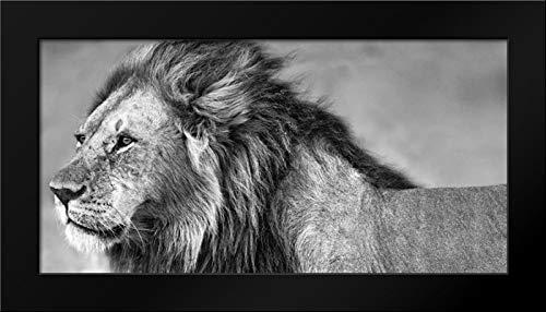 Lion Eyes 40x22 Modern Black Wood Framed Art Print by Ortega, Xavier