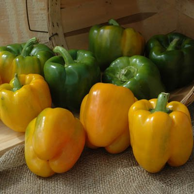 Pepper Summer Sweet 8620 F1 - Vegetable Seeds - 1,000 Seeds by GardenTrends (Image #1)