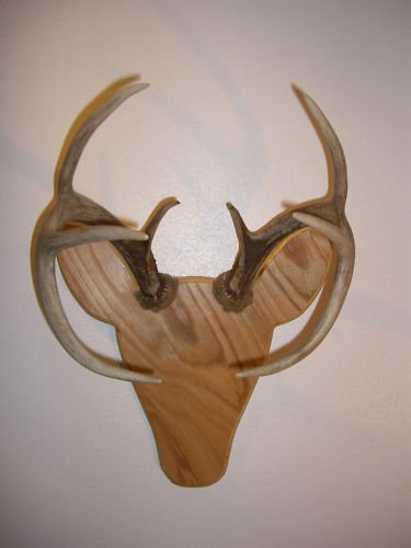 - Rackheads Buck Antler Mounting Plaque Kit