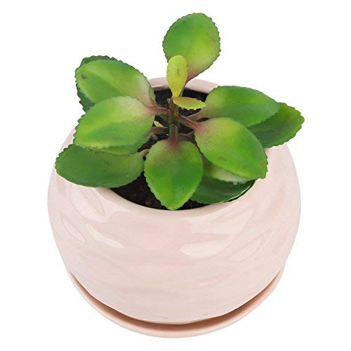 Pure.Lifestyle Nest Shape Succulent Plant Pot, Ceramic Cactus Plant Pot with Tray, Flower Seedlings Nursery Pot Container Planter - Pink