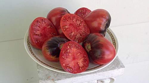 Pakuda SGT Pepper Tomato 25 Seeds Organic ()