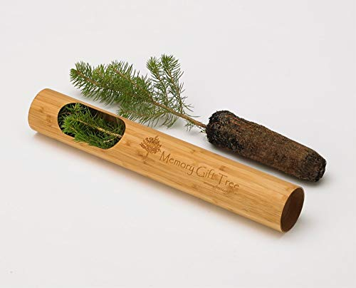 Memory Gift Tree (Spruce)
