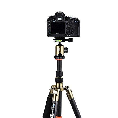 驚きの値段 KANEED カメラアクセサリー Triopo : GT-2505x8.Cキヤノン Nikon Nikon SonyDSLRカメラのためのB - B07PJ97ZYN 1アルミボールヘッド付き調節可能なポータブル炭素繊維三脚 三脚、一脚 (色 : Color1) Color1 B07PJ97ZYN, キュウラギマチ:ff2606e3 --- martinemoeykens.com
