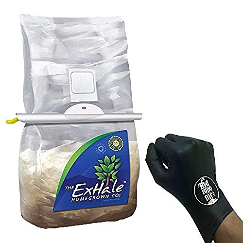 Mushroom Homegrown - ExHale Homegrown CO2 with Hanger and THCiTY Gloves