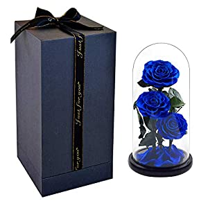 Pigting Beasts Rose in Glass Dome +Enchanted Rose Holder +Beauty and The Beasts Rose Kit + Large Ecological Rose Charm Petals Ornament 108