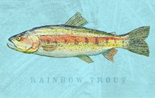 Rainbow Trout by John W. Golden Animal Fish Print Poster ()