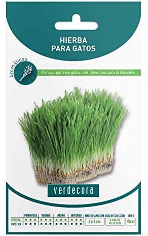 Verdecora | Semillas hierba para gatos - Hierba Gatera - Hierba para Gatos - Sobre con Semillas Hierbas Aromáticas - Semillas aromáticas: Amazon.es: Jardín
