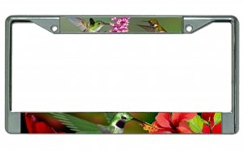 Hummingbirds Chrome Photo License Plate Frame Free Screw Caps with this -