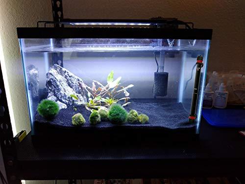 ChungGorGor 250w Aquarium Heater, Quartz Glass Fish Tank Heater with Built-in Thermostat, Automatically Shut-Off, UL Listed, Submersible Betta Tank Water Warmer for 55-75 Gallon Aquarium