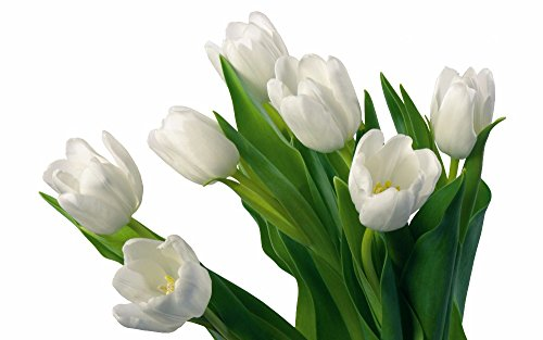 2 FT long LARGE Latex Real Touch angel style tulips artificial spring flowers (pack of 6) (Milky White) ()
