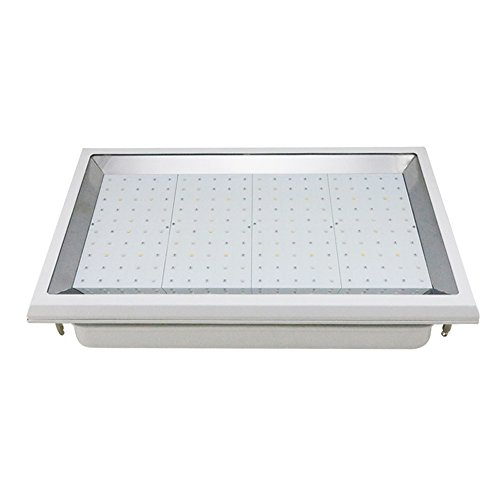 Shenzhen Led Grow Light Factory in US - 4