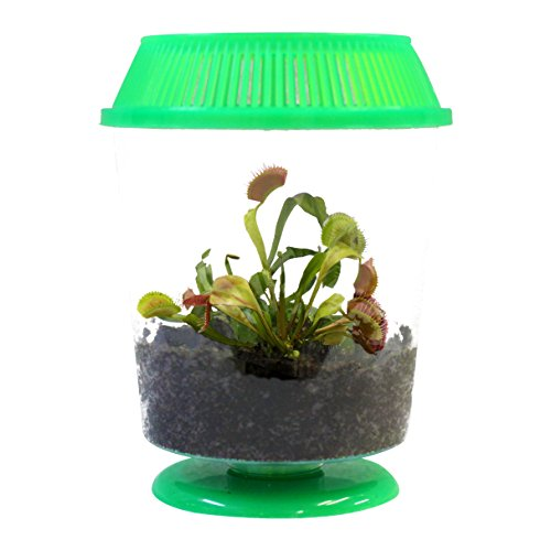 (Adult Venus Flytrap in 4.5