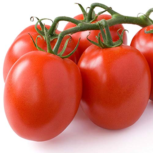 (Seeds - 25 Tomato Seeds Little Napoli Mini Roma Tomato F1 Hybrid by TricaStore)