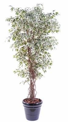 Arbre artificiel - plante semi-naturelle Ficus lianes panaché PF 150cm - taille : 150cm