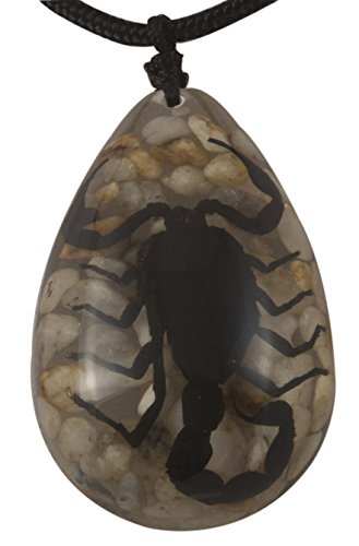 Medium Black Scorpion Necklace - Black Scorpion on Stone Background on a Black Cord That Adjusts up to 22