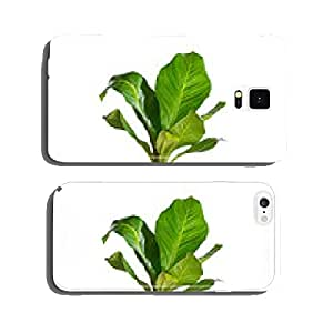 Houseplant cell phone cover case iPhone6 Plus