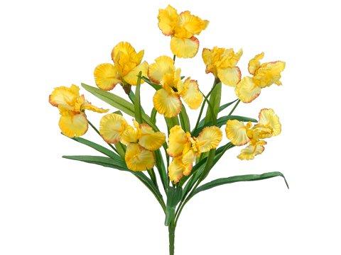 22-Iris-Bush-x9-Yellow-Pack-of-12