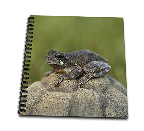 3dRose Stamp City - amphibian - A macro photograph of a Copes gray tree frog. - Drawing Book 8 x 8 inch (db_315553_1)