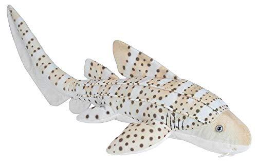 zebra shark - 1