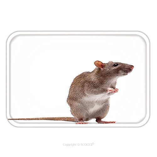 on-slip Rubber Backing Soft Absorbent Doormat Mat Rug Carpet Cute Domestic Brown Rat Standing N A Tiptoe 66896305 for Indoor/Outdoor/Bathroom/Kitchen/Workstations (Tip Coupe)