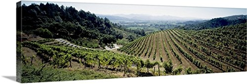 Newton Vineyard California - Canvas on Demand Premium Thick-Wrap Canvas Wall Art Print entitled Vineyard, Newton Vineyard, St. Helena, Napa Valley, Napa County, California 60