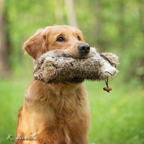 /pour le apportier Entra/înement//Apport avec Wild-factice dans la formation chien et le chien dentra/înement 500/g/ Lapin factice env