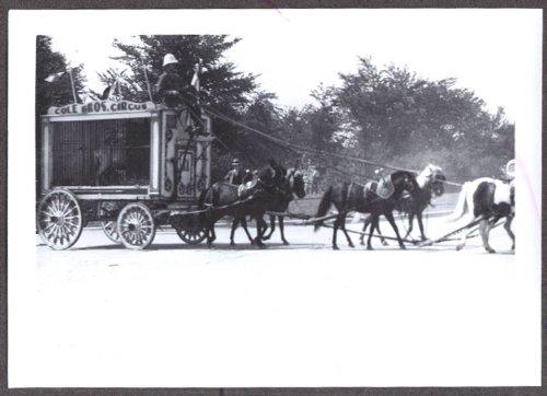 Cole Bros 6-horse animal parade circus photo 1939