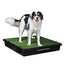 PetSafe Portable Pet Toilet, Large