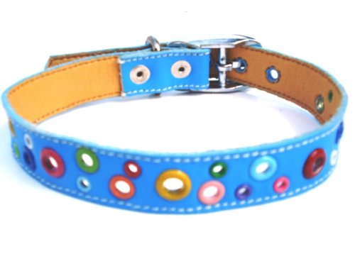 Loki Puppy Leather (The Cool Puppy Loki Puppy Leather Dog Collar Sky Blue Large (12-14 inches))