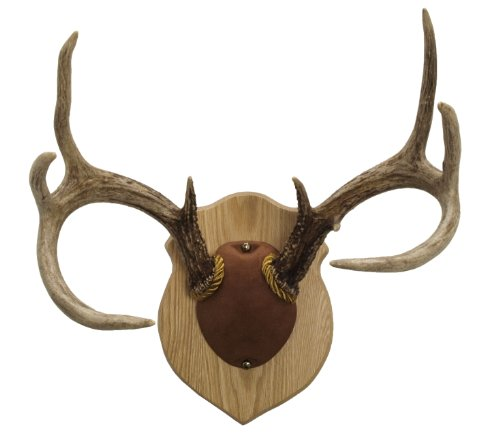 Walnut Hollow Country Antler Mount & Display Kit, Oak