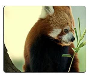 China Animals Red Pandas Eating Mouse Pads Customized Made to Order Support Ready 9 7/8 Inch (250mm) X 7 7/8 Inch (200mm) X 1/16 Inch (2mm) High Quality Eco Friendly Cloth with Neoprene Rubber MSD Mouse Pad Desktop Mousepad Laptop Mousepads Comfortable Computer Mouse Mat Cute Gaming Mouse pad