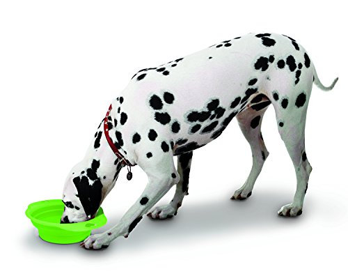 Large Collapsible Lightweight Portable Pet product image