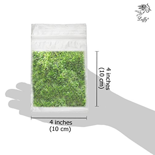Christmas Moss Carpet.Luffy Wild Christmas Moss In Loose Form By Lush Green Moss For Aquarium Decor Create A Moss Wall Or Moss Carpet Soft And Comforting For Fish