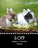 2019 Weekly and Monthly Planner: Two Little Bunnies Daily Organizer -To Do -Calendar in Review/Monthly Calendar with U.S. Holidays–Notes Volume 39