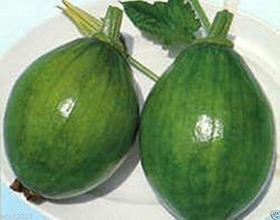 Asian Vegetable 10 Seeds - Early Bulam, Korean Summer Squash A.k.a Avocado Squash