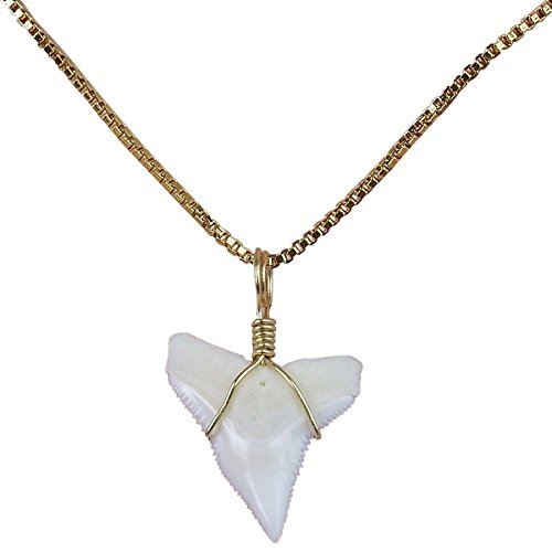 - GemShark Real Sharks Tooth Necklace 14 K Gold Plating Box Collarbone O Chain Charm for Girl ... (0.7 in Bull)