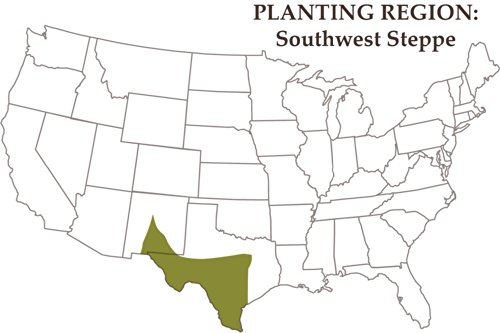 Southwest Semi-Arid Steppe Horse Pasture Blend (1 acre) by Nature's Seed (Image #2)