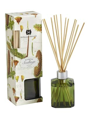 Hillhouse Naturals Reed Diffuser 5 Oz. - Evergreen Seedlings by Hillhouse Naturals