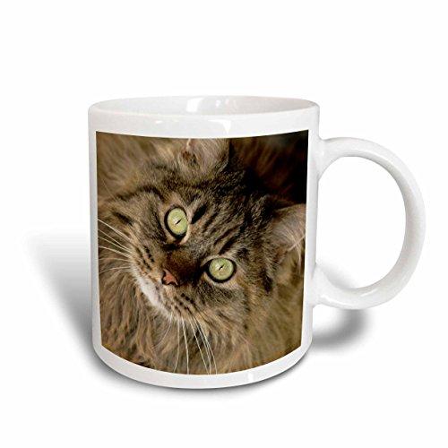 3dRose mug_92674_1 Maine Coon Cat, Santa Fe, New Mexico Us32 Jmr0448 Julien Mc Roberts Ceramic Mug, - Santa Outlet New Fe Mexico
