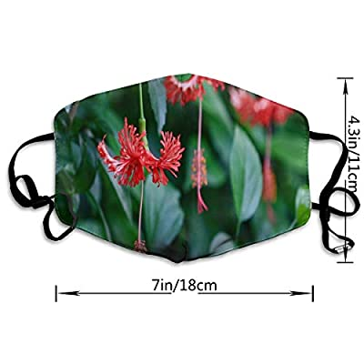 Face Mask Jungle Flowers Unique Cycling Half Face Earloop Ski Mask for Boys