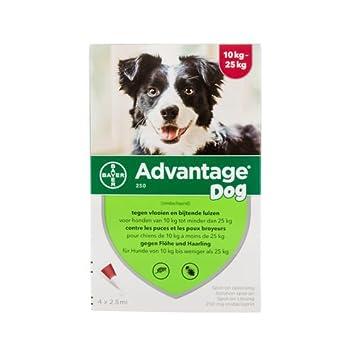 Advantage 250 (perros 10 - 25 kg) - 4 pipetas de 2,5 ml: Amazon.es: Productos para mascotas