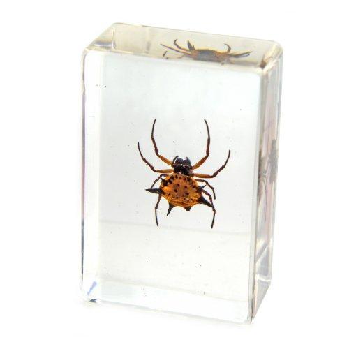 Spider Paperweight - Spiny Spider Paperweight (1 1/8 x 1 3/4 x 3/4