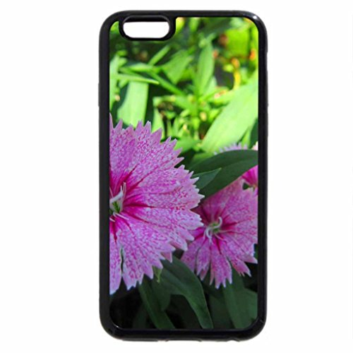 iPhone 6S / iPhone 6 Case (Black) Dianthus chinensis.