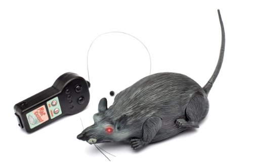 Westminster Radio Controlled Rat -