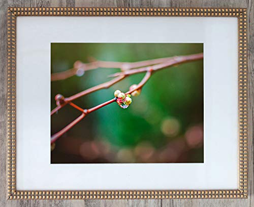 On Edition Photography - Raindrop on Branch, Limited Edition 1, Photo 4 of 4 - Framed Office Art- Inspirational 24x30-with 20x24-mat