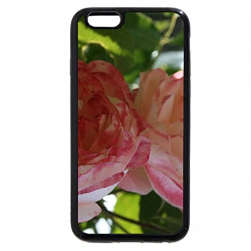 iPhone 6S / iPhone 6 Case (Black) pink roses for tea time