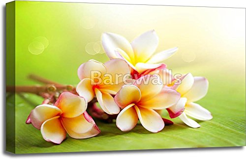 Frangipani Tropical Spa Flower. Plumeria Gallery Wrapped Canvas Art (20in. x 30in.)