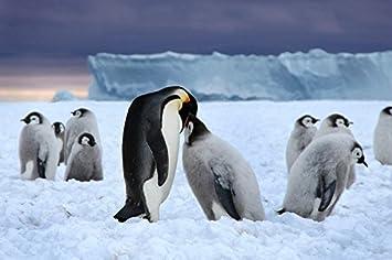 dadad79e844a 雛と皇帝ペンギン動物 # キャンバス印刷アートポスター 写真 部屋インテリア jpg 355x236 ヒナ